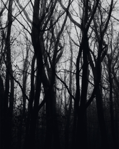 Создавайте незабываемые лесные пейзажи, используя эффект многократной экспозиции | Съёмка пейзажей | Урок #200729