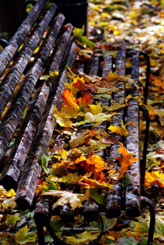под картинки осенний сад промокшая скамейка дворник серьги все