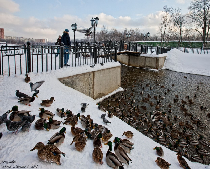 Яуза в районе города Мытищи