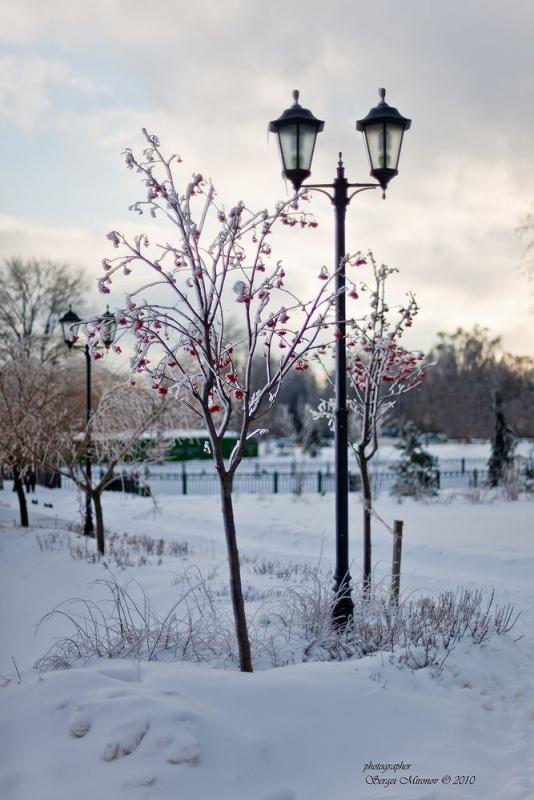 Рождественский вид мытищинского парка