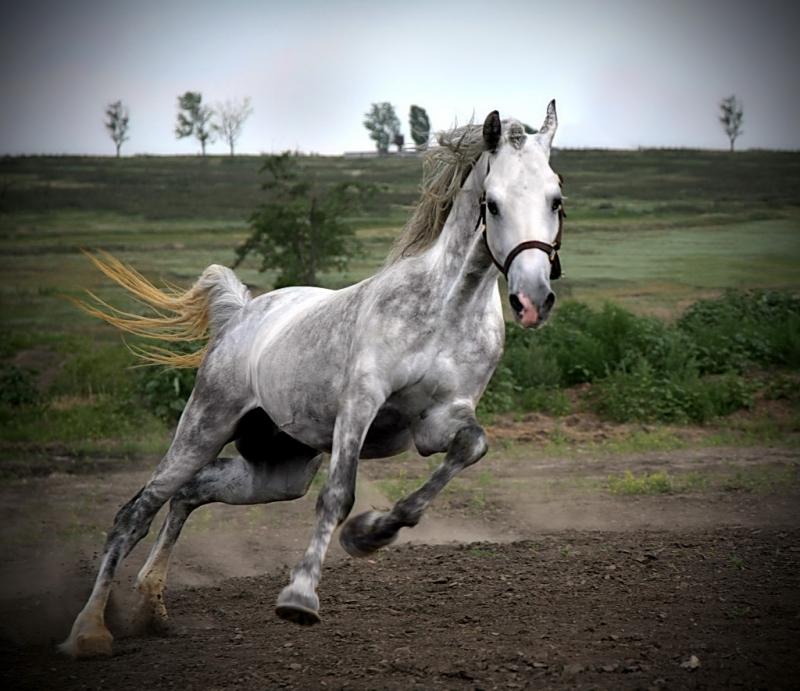 По коням