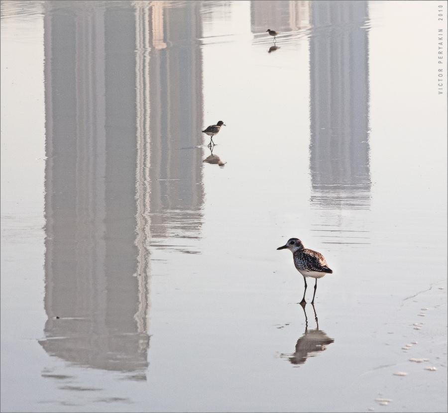 Птицы в короде | Виктор Перякин | Фотография #27479