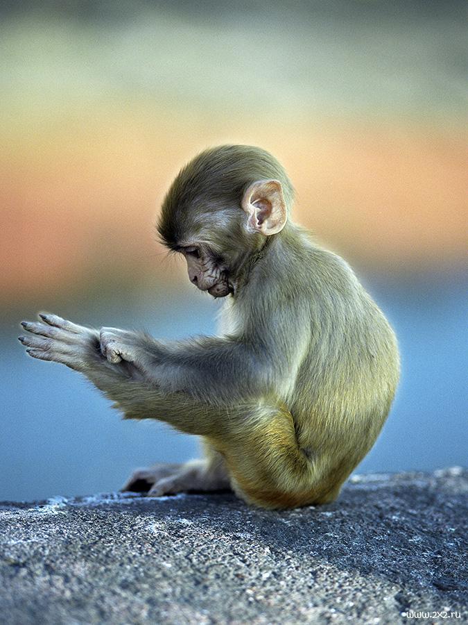 Смешные картинки с обезьянками с прикольными надписями