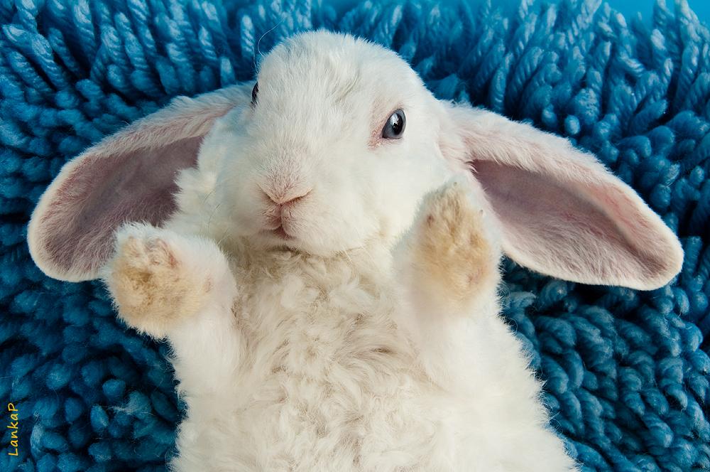 кролик баранчик фото какой еще памятник