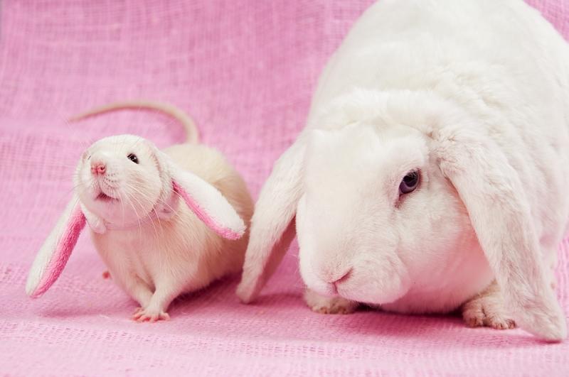 Кролик и крыса в шапочке