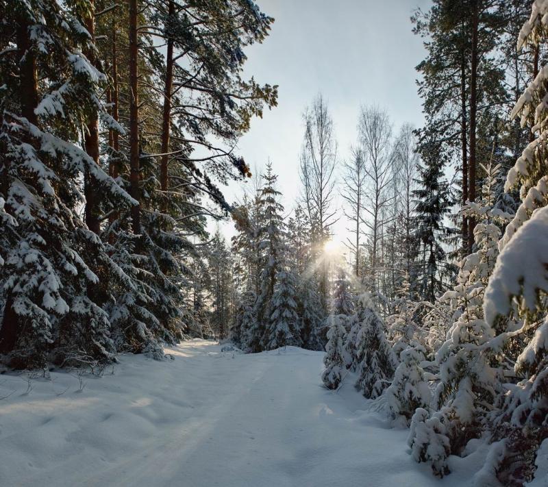 россии такому путешествие в зимний лес с фотоотчетом итальянской столицы