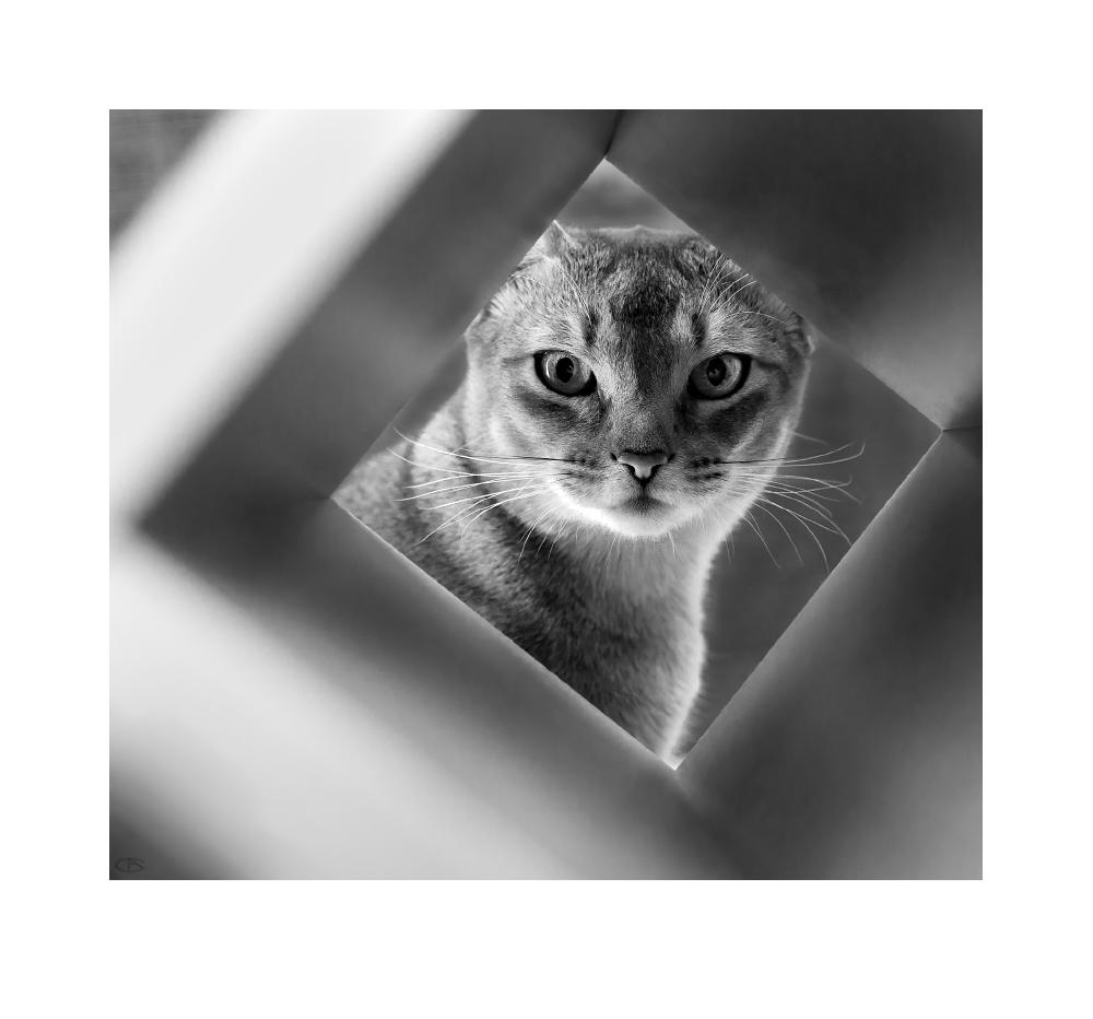 квадратура взгляда   Валерий Саяпин   Фотография #58543