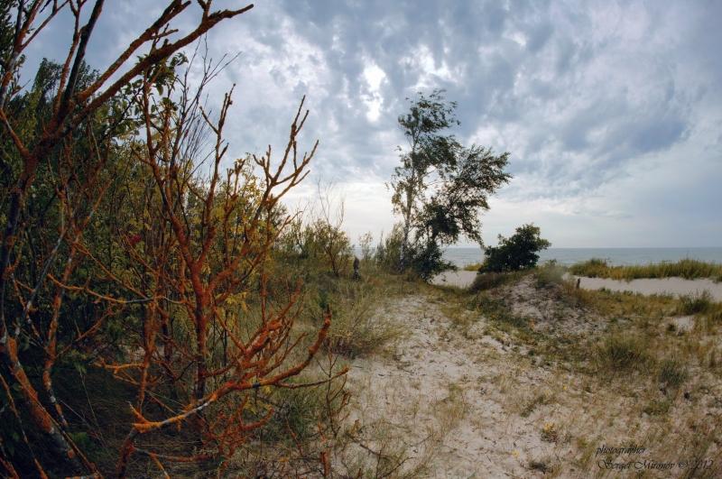 дюны Паланги