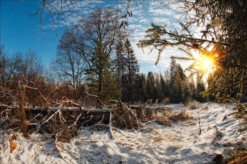 первый зимний кадр