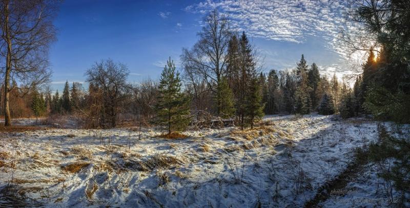 панорама в ноябрьском лесу