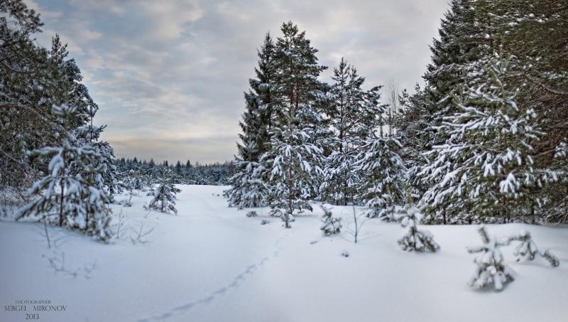 В Рождественском лесу