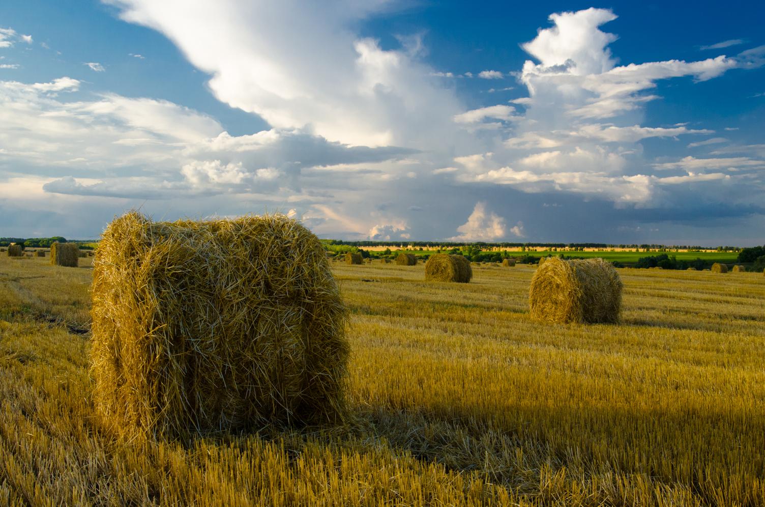 клеточный принт фото сан русское поле деревья