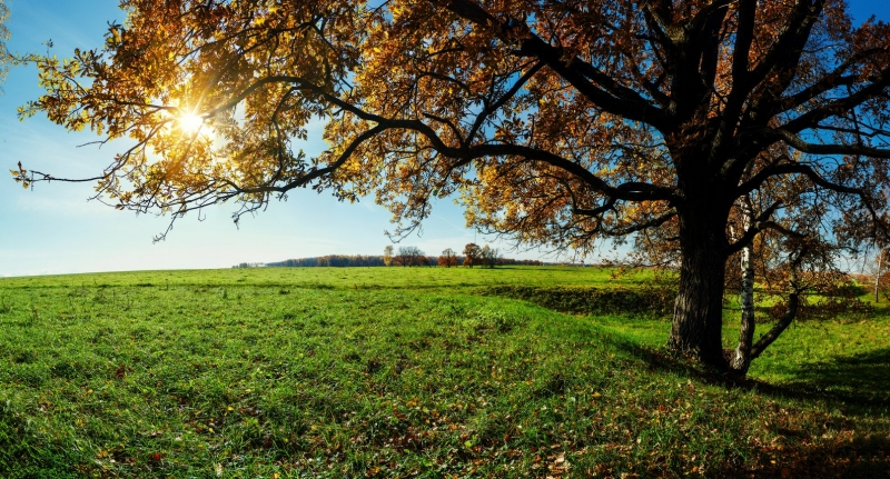 осенний вид с солнышком в ветвях