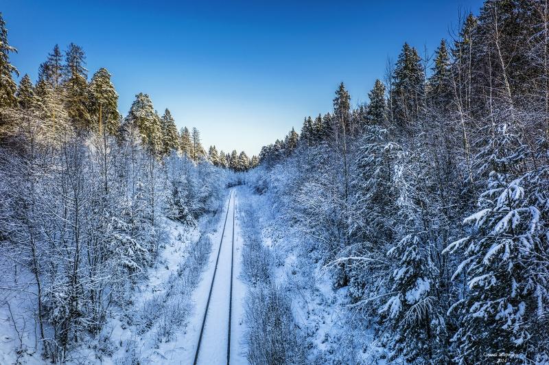 линейная перспектива зимнего леса