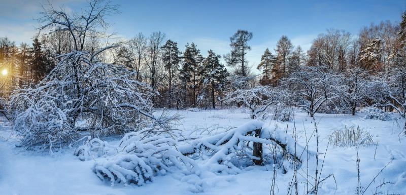 зимний лес на рассвете