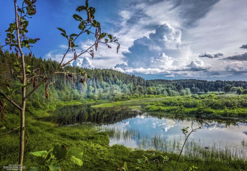 Пейзаж. река Вага, Вологодская область