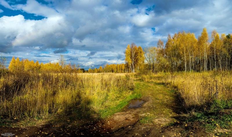 Осенний день в лесу