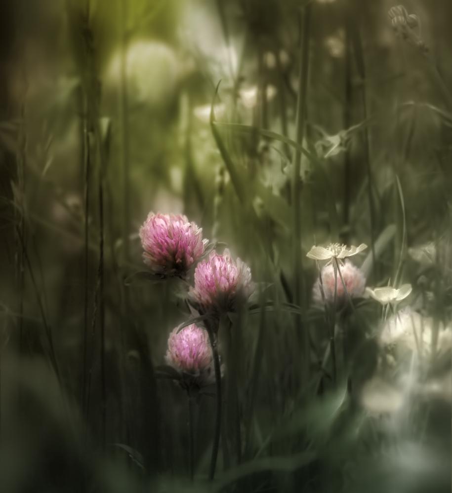 Полуявь, полусон... | Живой мир | Фотография #139626