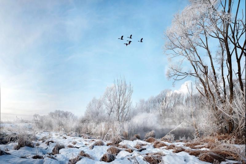 зимний вид с летящими утками