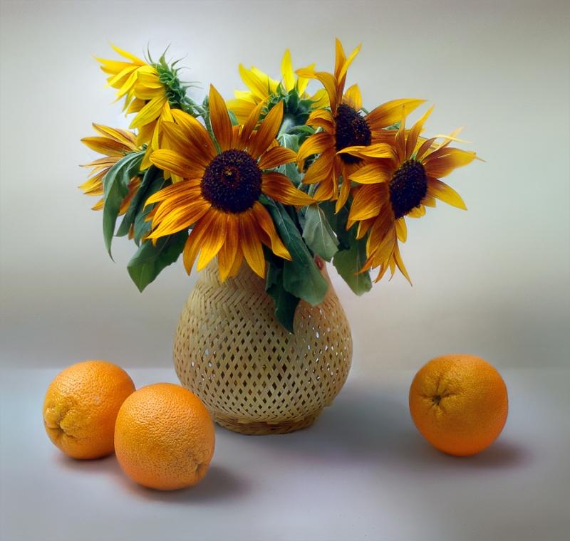 красивые фото натюрмортов из апельсин солнце окраска проявится