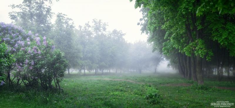 туман в городу