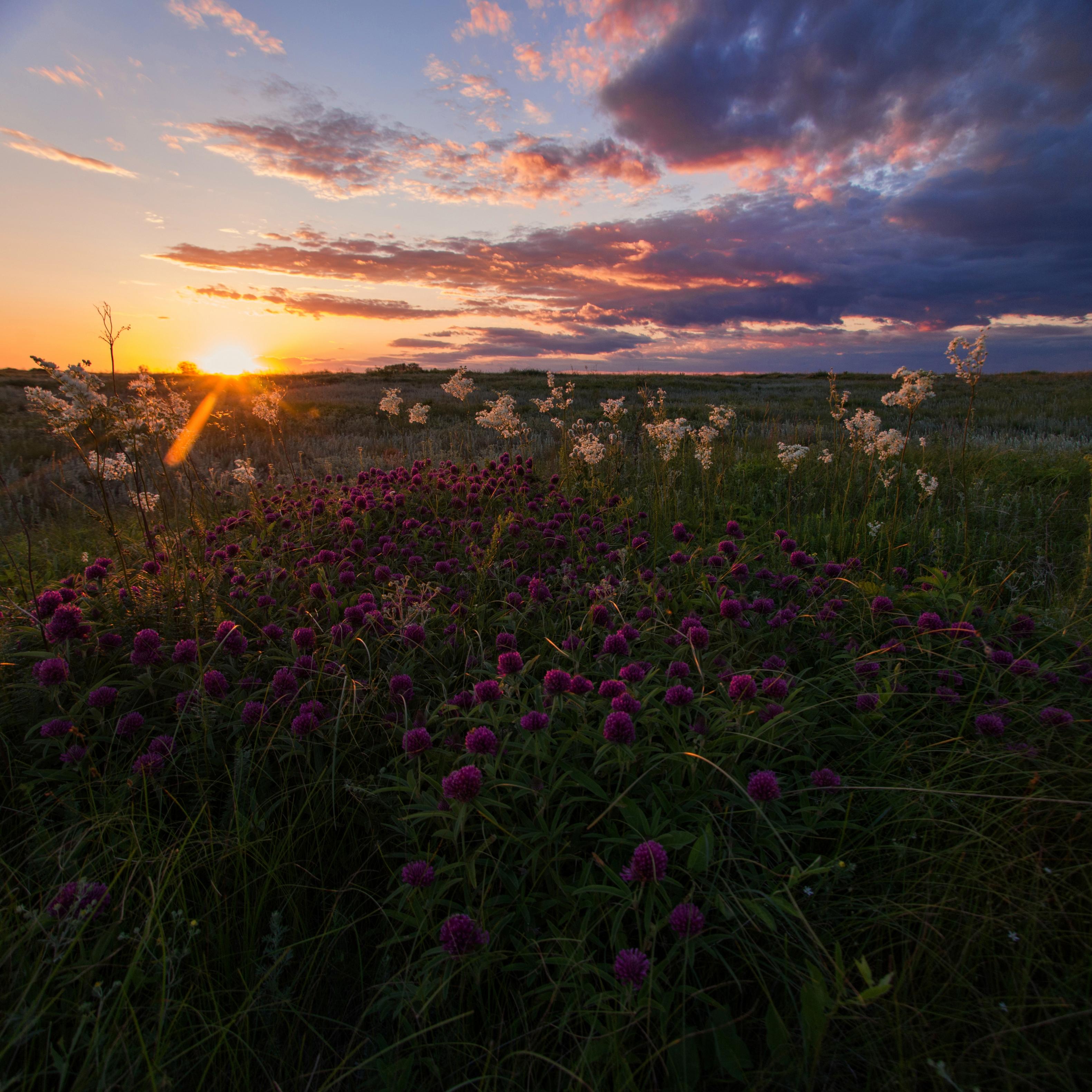 Розовый закат | Природа | Фотография #155132