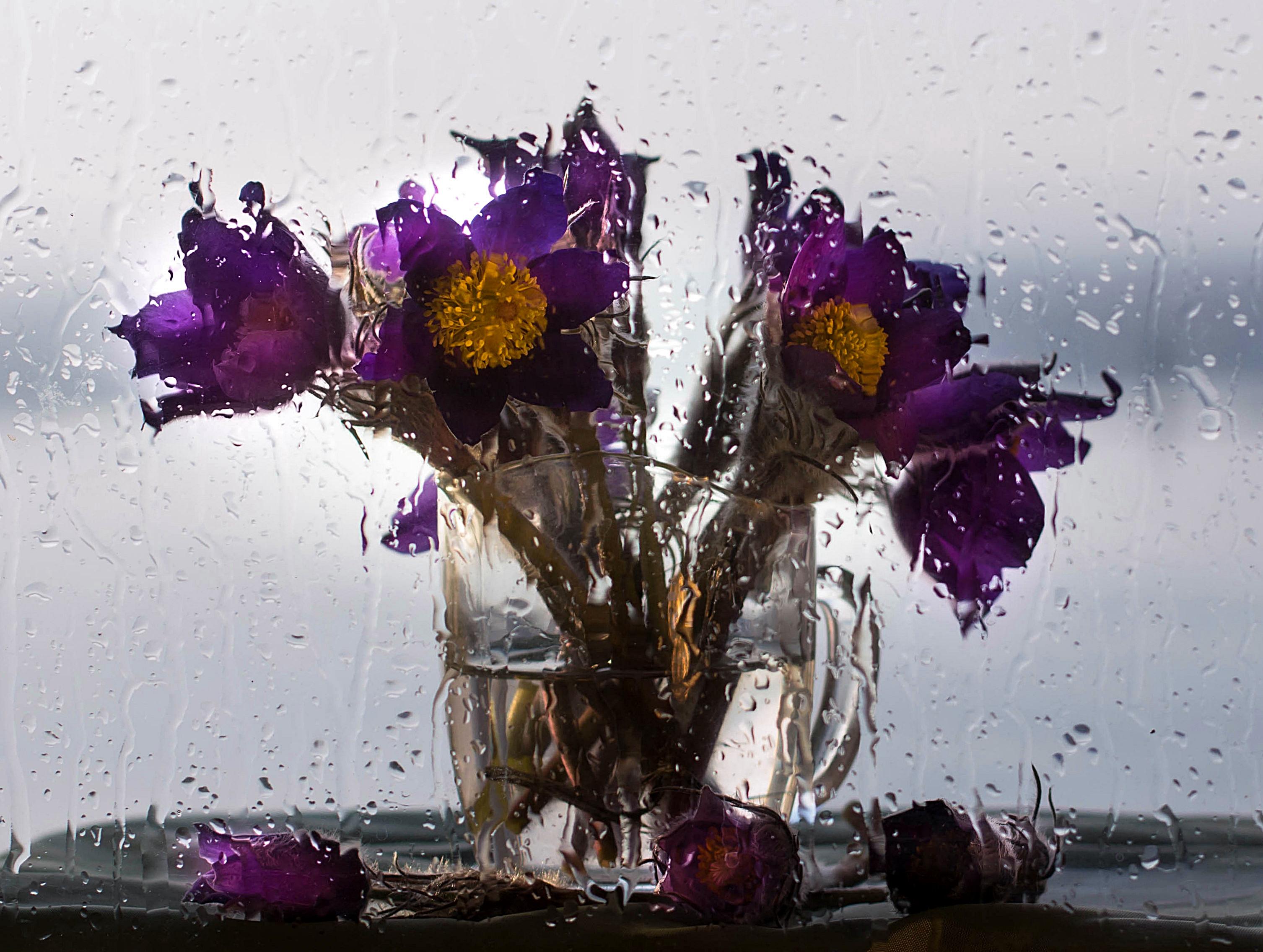Цветы за мокрым стеклом фото