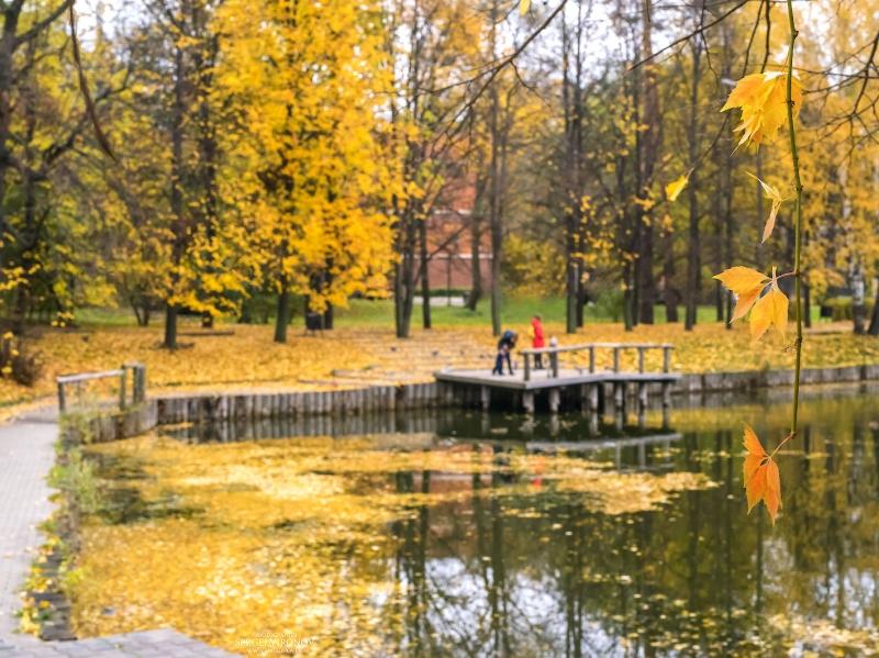 когда листья еще были желтыми...