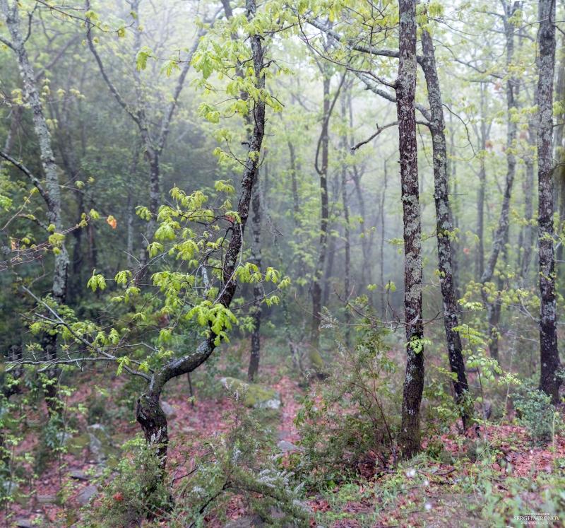 лес, туман, дождь....