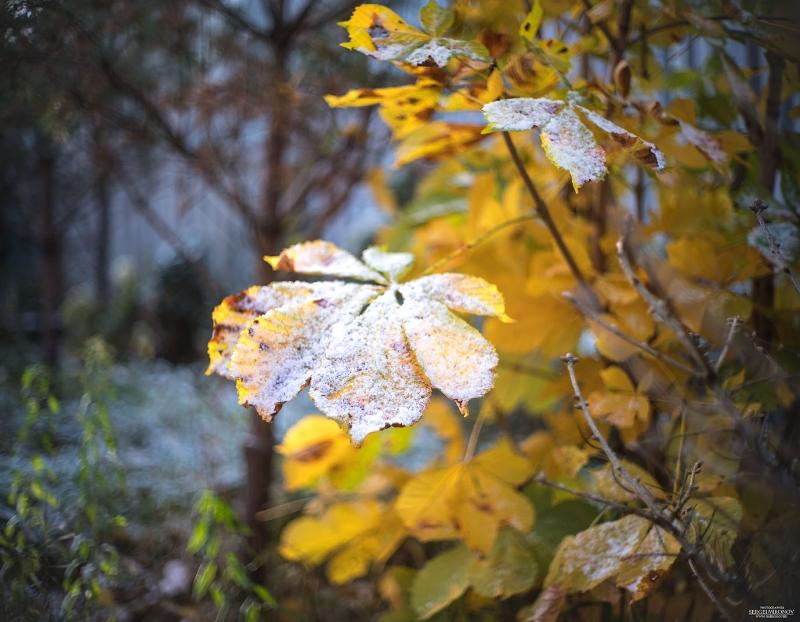 посеребрянная осень...