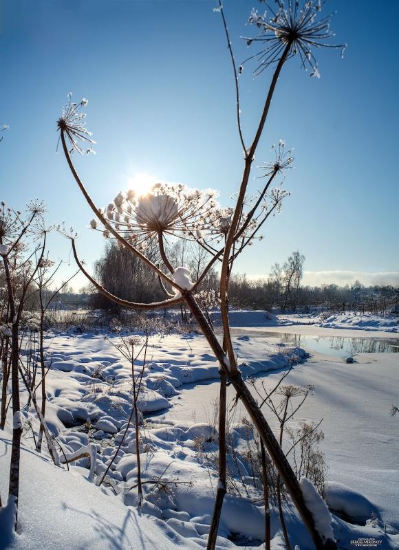 великаны на зимней Клязьме