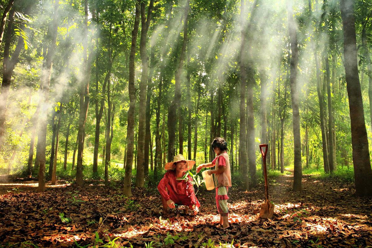 фото конкурс жизнь леса и судьбы людей автомобиль отличном состоянии