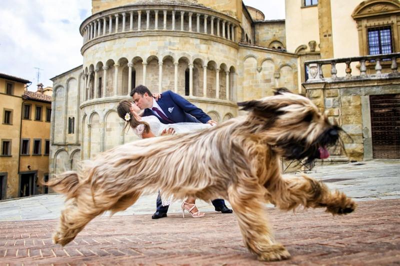 Wedding Photography Select: лучшие работы с участием животных | Новость | Текст #203635