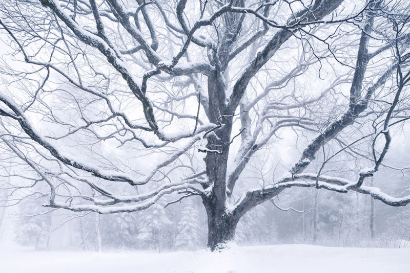 Kilian Schönberger: зимние сказки в ландшафтной фотографии | Статья | Текст #204989