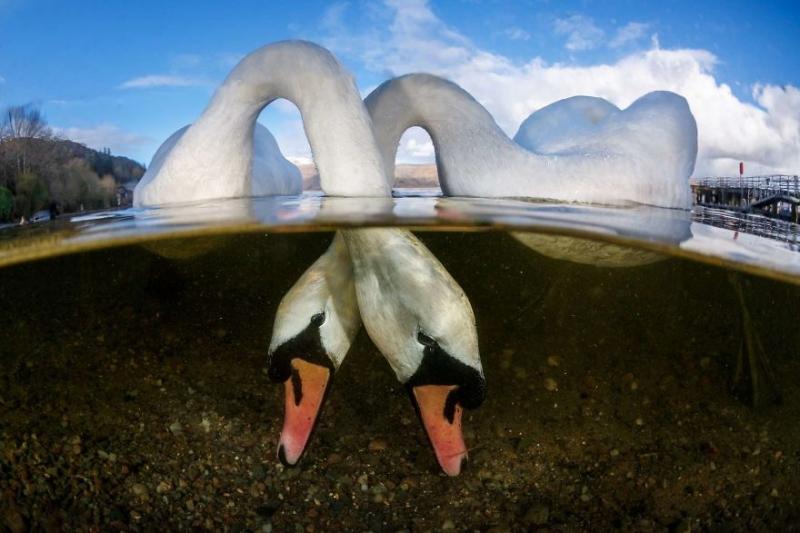 Победители конкурса Underwater Photographer Of The Year 2018