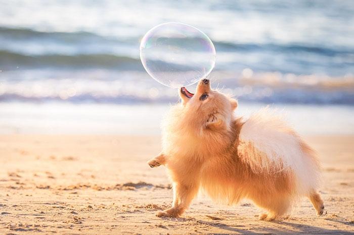 The Best Dog Photos 2018 анонсировали победителей
